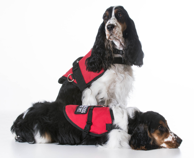 service dogs for seniors