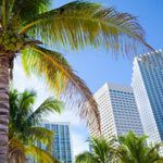 Palm trees and buildings in downtown Miami, Florida