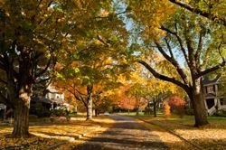 Fall trees are seen along a quite residential street in Newton, MA (Massachusetts)